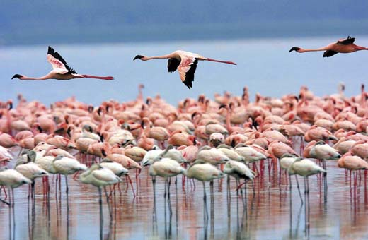 SFF Los Flamingos y Ranchería Wayuú
