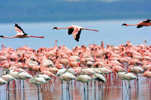 Avistamiento de Flamencos rosados en Camarones Guajira Colombia