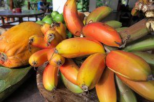 Banano rosa de finca La Jorará cerca a Santa Marta